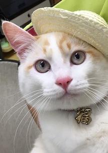 福と帽子.JPG